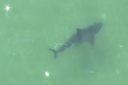 Swimmer dies from shark attack injuries in Massachusetts