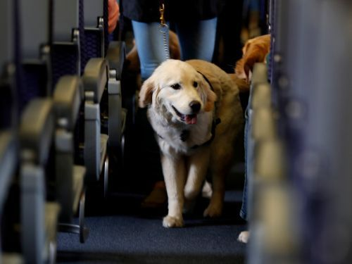 United is making a big change to its pet policy after a puppy tragically died in an overhead bin during a flight