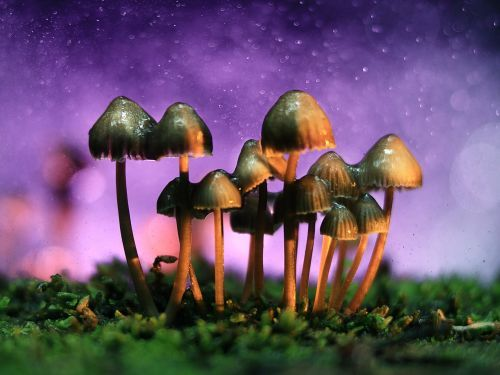 A best-selling author tried LSD, shrooms, and DMT - and wrote about all 3 psychedelic trips