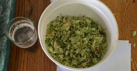 Homebrewing Hero Charlie Papazian Brewed a Beer with Smithsonian-Grown Hops