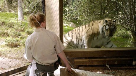 TIGER tests positive for Covid-19 at Bronx Zoo as 5 more big cats develop 'dry cough'