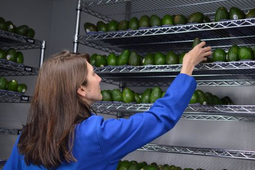 A Bill Gates-backed edible coating makes avocados last twice as long - and it's debuting at Costco