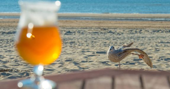Drunk Birds Caught Staggering After 'Gulls' Night Out'