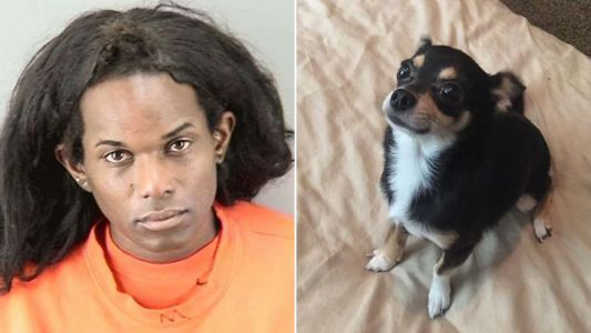 Woman gets 3 years for throwing Chihuahua to its death from 7-story parking garage