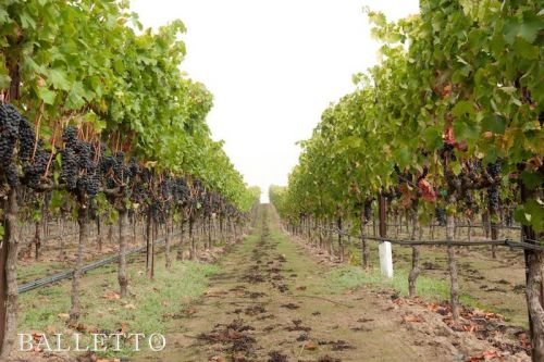 Balletto Vineyards: Beautiful Things Happen When a Farmer Starts Growing Grapes