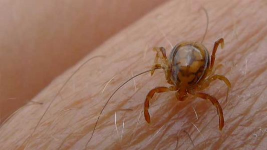 Tick season: What to look for, how to protect yourself