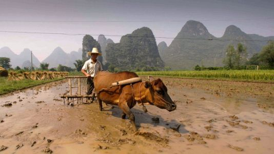 From Cattle To Capital: How Agriculture Bred Ancient Inequality