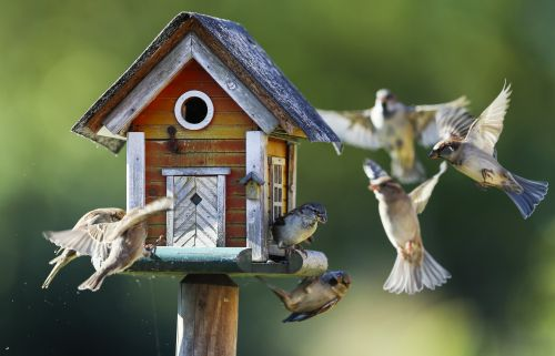 An avian apocalypse has arrived in North America. Birdsong could become a rare sound