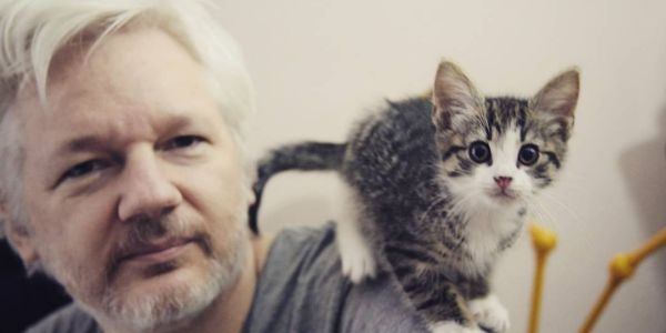 Julian Assange reportedly gave away his cat so it wouldn't be trapped in the Ecuadorian Embassy with him anymore