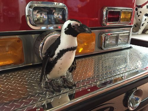 Newport Aquarium offers free admission for first responders next week