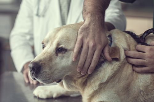 Heartbroken vets beg humans to stay with pets when they're being put down: 'Do not leave them'