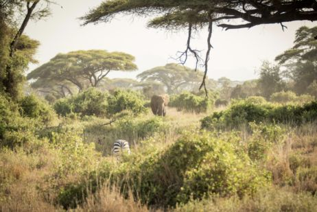 Abercrombie & Kent Hosts Global Wildlife Travel Itinerary via Private Jet
