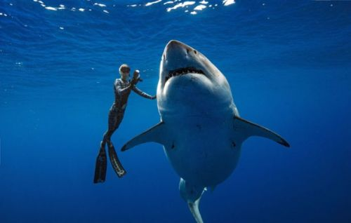 Divers Swim With Massive 20 Foot Great White Shark In 'Magical Encounter'