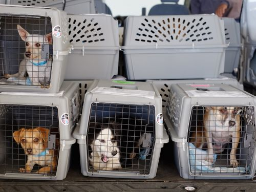 United passenger who was forced to put puppy in overhead bin where it died reaches a settlement with the airline