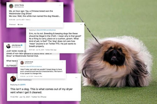 Bone to pick: Westminster dog show winner Wasabi sparks controversy