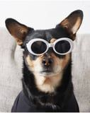 """Let Your Dog Exude """"You Can't Sit With Us"""" Energy in These Awesome Pet Sunglasses"""