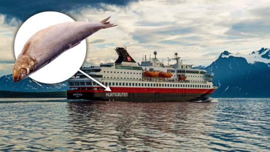You Can Run a Cruise Ship on Dead Fish Just FYI