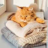 Your Cat Isn't Lying on Your Laundry Just to Cover It in Fur - It's a Sign of Love!