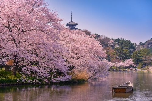 8 Top Travel Tips for Your First Time Visit to Japan