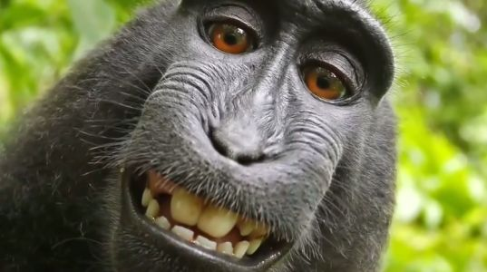 Monkey selfies, Irma, eclipse, and Lauer top Google in 2017