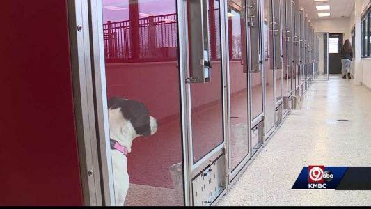 Super Bowl win helps clear some of KC Pet Project's kennels