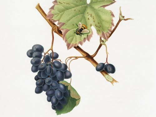 Native Grapes of Italy author Ian D'Agata coming to Houston next month
