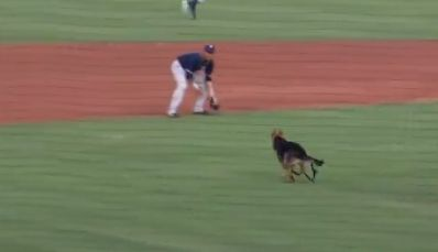 Dog chases baseball around field during group picture for dog night at minor league game