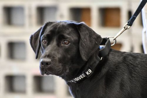 A CIA bomb sniffing dog was fired because she didn't like sniffing bombs anymore
