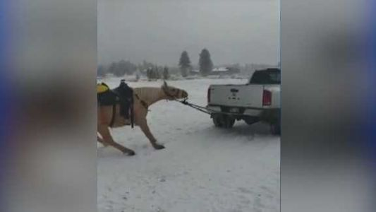 Couple charged after horse is tied, dragged behind moving truck on snowy road