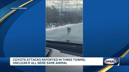 Man kills coyote attacking son on Exeter trail