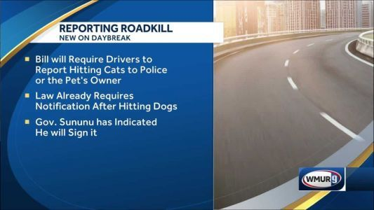 Sununu expected to sign bill that would require people to call police if they injure or kill cats