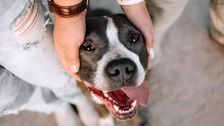 Denver Will Not Overturn Pit Bull Ban After All