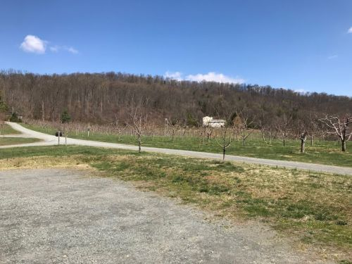 Visiting Virginia Cideries in Charlottesville