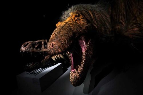 Someone is trying to sell a baby T-rex skeleton on eBay for $2.95 million
