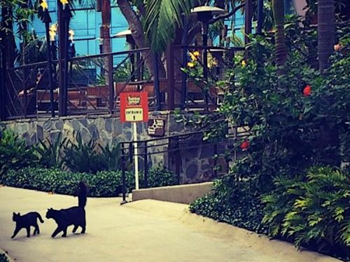 Disneyland is home to hundreds of feral cats who have free rein in the park - and you can adopt one if you work there