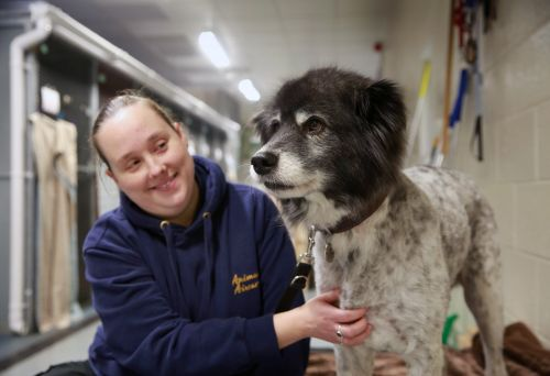 Meet the woman who handles the snow leopards, flamingos, dogs, and spiders that fly in and out of one of Europe's busiest airports