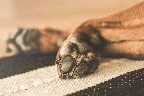 Dog tests positive for COVID-19 in Louisiana, first case