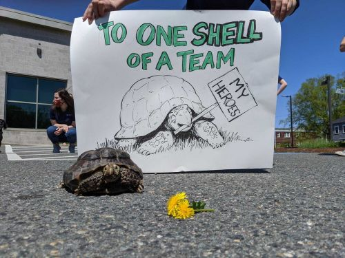 53-year-old tortoise adopted after owner dies of COVID-19
