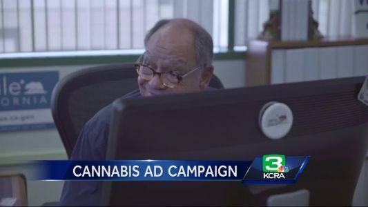 California launches 'Cannabiz' for pot business permits