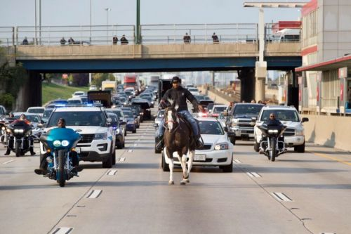 'Dreadhead Cowboy' taken into custody after riding horse on Dan Ryan