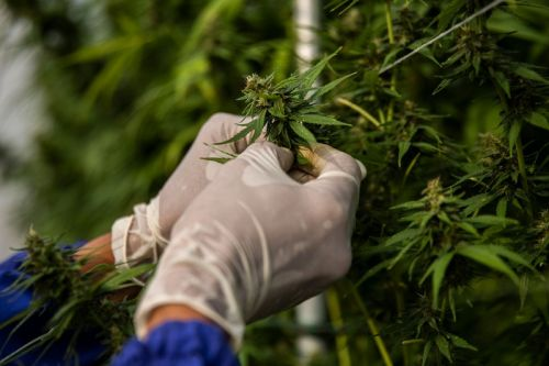 New York Reportedly Reaches Deal to Legalize Marijuana