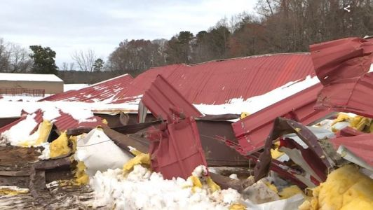 Three horses killed instantly when arena collapses under weight of snow