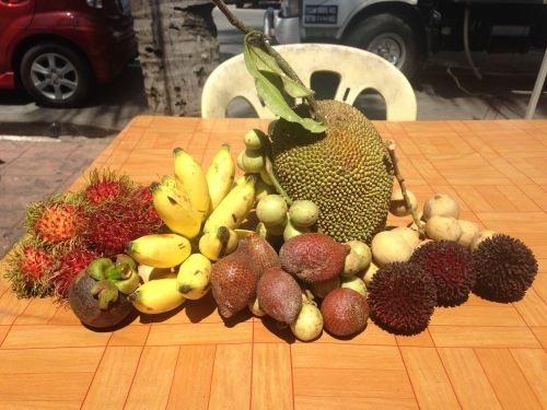 I spent 2 years living in Malaysia - here are 14 of my favorite fruits Americans probably wouldn't recognize