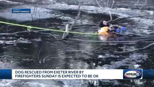 Dog rescued from Exeter River after falling through ice