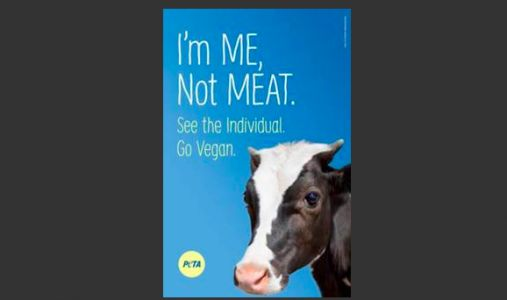 PETA to erect billboard in honor of cows killed in interstate crash