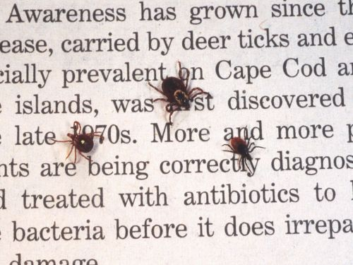 Diseases spread by ticks are on the rise - here's what you are at risk for throughout the US