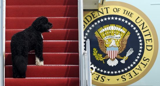 Bo Obama: A look back at the first dog's fetching life