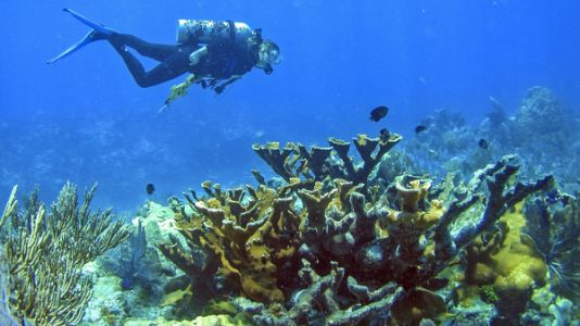 Florida's Corals Are Dying Off, But It's Not All Due To Climate Change, Study Says