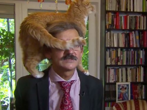 A cat crawled onto a TV commentator's head during a news interview because that's what cats do