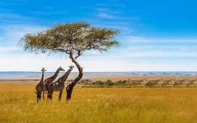 South African Tourism unveils dynamic tourism recovery strategy for India